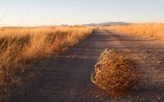 Проверяем наличие инвентаря, семян и удобрений