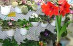 Цветы с отрицательной энергетикой, которые нельзя заводить дома