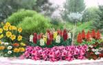 Как красиво оформить цветник, или Правила сочетания цветов на клумбе