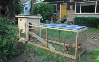 Переносной курятник на даче – как построить и установить