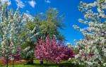 Почему сад не цветет?