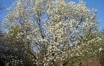 24 часа аромата – сад, который благоухает непрерывно