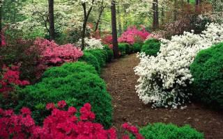 10 великолепных кустарников, которые цветут в июле