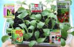 Полей – и вырастет: лучшее средство для регуляции роста растений