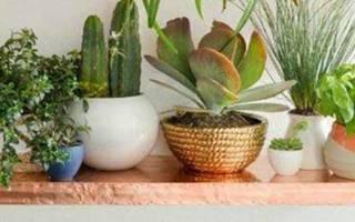 Электронные комнатные растения