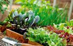 Готовимся к уборке урожая и проводим повторные посевы