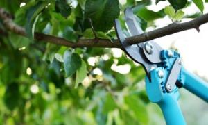 Секатор для обрезки садовых деревьев и кустов – разбираемся, какой лучше