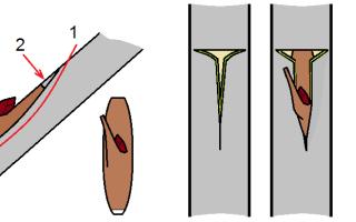 Аблактировка, или Прививка растений сближением