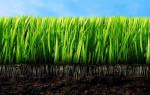 Как получить здоровую почву без всякой «химии»?