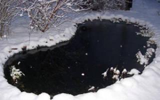 Из пруда в подвал – как отправить на зимовку водные растения
