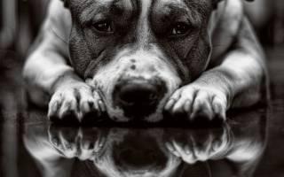 Вся правда о собаках: 6 самых интересных фактов