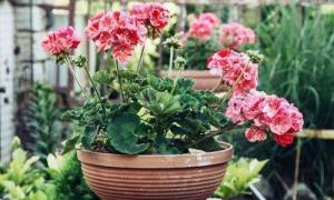 Комнатные растения, которые привлекают удачу, деньги и приносят счастье в дом