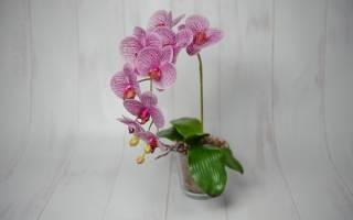 Как выбрать орхидею – 7 секретов успешной покупки