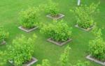Деревья и кустарники в саду – как подобрать и расположить растения?