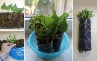 Как укоренить черенки декоративных растений в сфагнуме: пошаговая инструкция