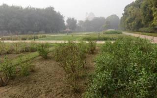 Лучшие сидераты для огорода: как сеять и когда заделывать в почву